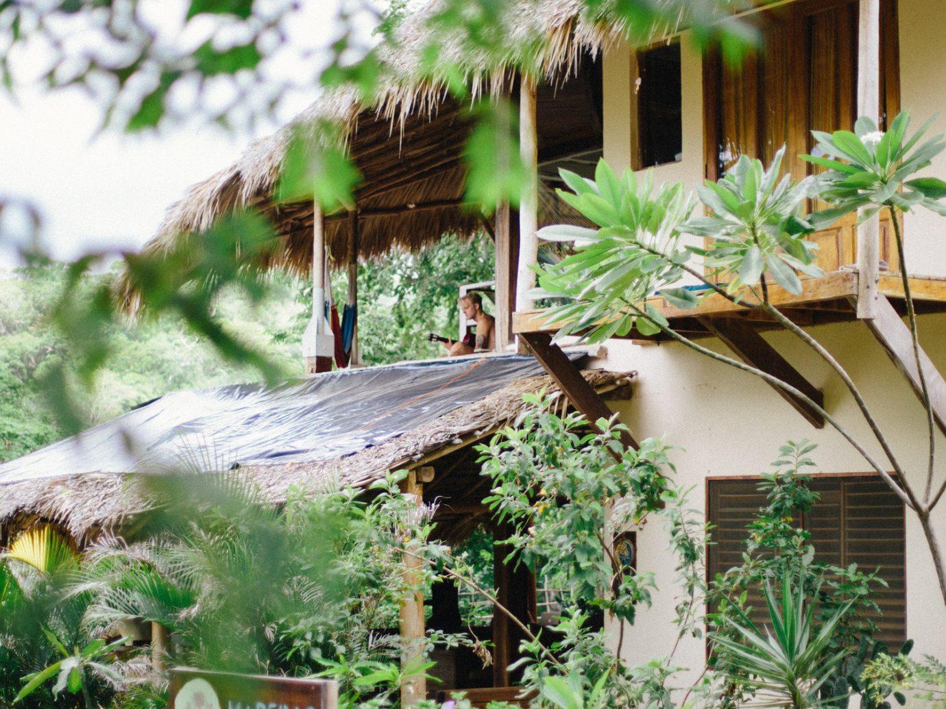 Hotels Solo Travel outdoor tree flora plant botany Garden backyard flower yard Jungle Resort bushes surrounded