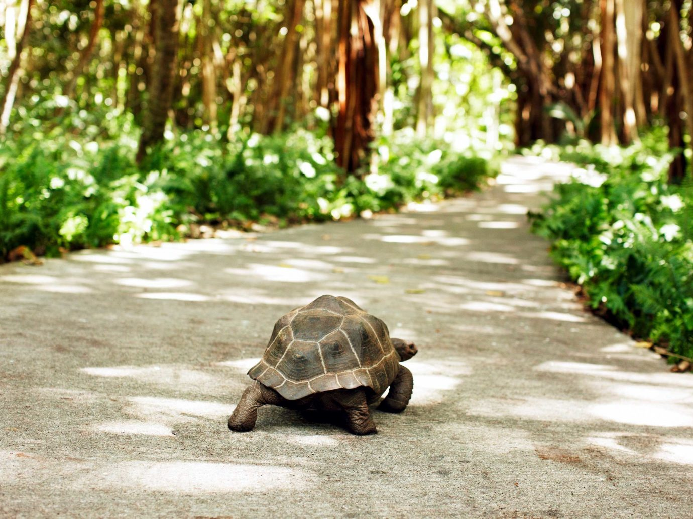 Hotels Jungle Outdoors reptile tree animal turtle ground outdoor green tortoise lawn curb