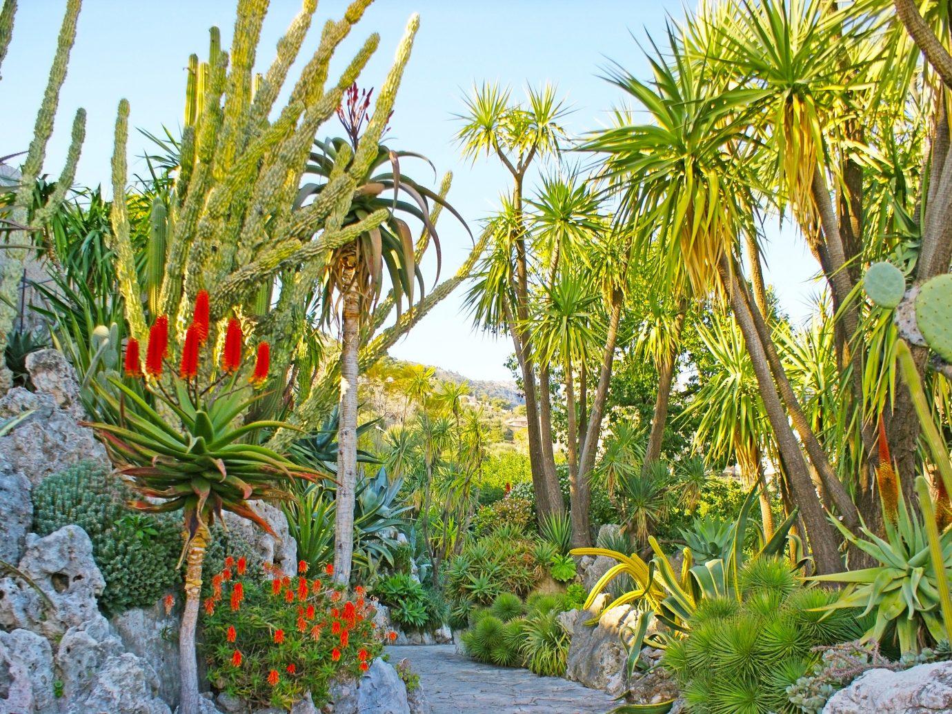 Offbeat Style + Design Travel Trends tree outdoor plant vegetation palm flora arecales botanical garden flower tropics palm tree landscape cactus landscaping Garden flowering plant