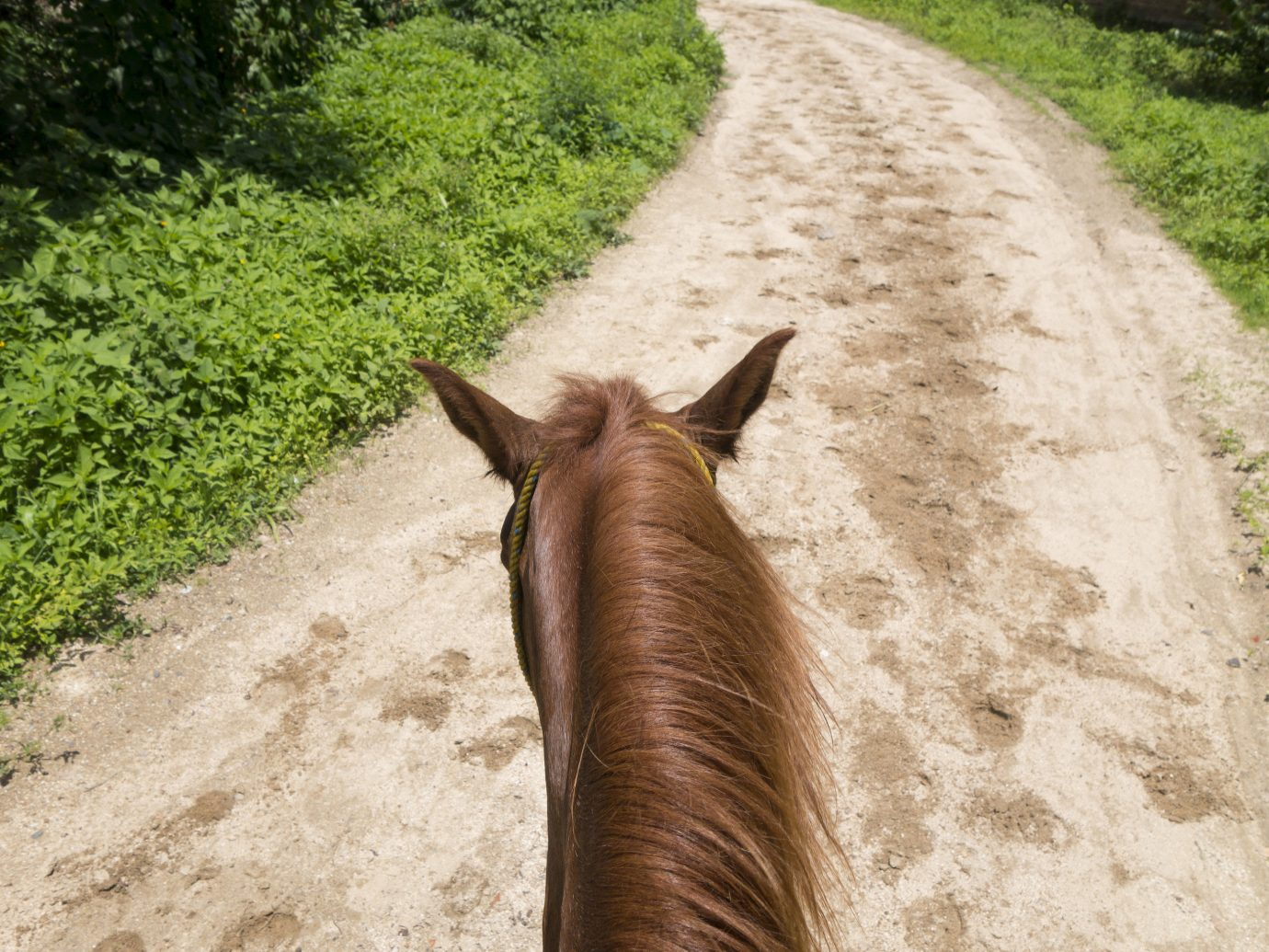 Offbeat outdoor ground tree grass mammal fauna path animal dirt soil Wildlife horse like mammal trail horse