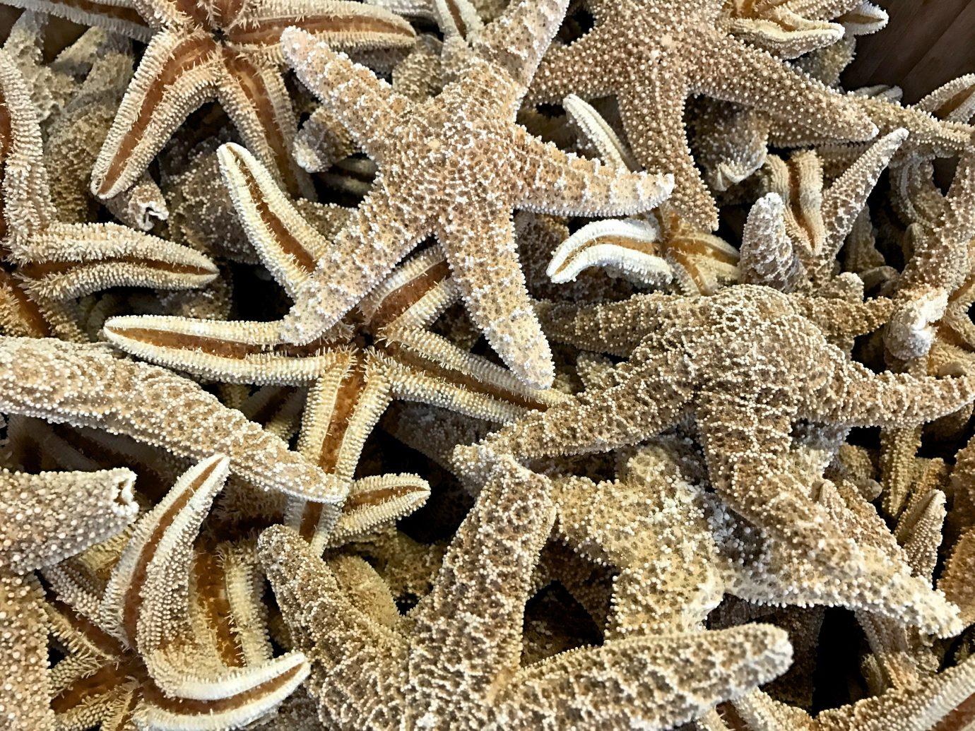 Trip Ideas invertebrate animal starfish marine invertebrates echinoderm coral food pattern material different several