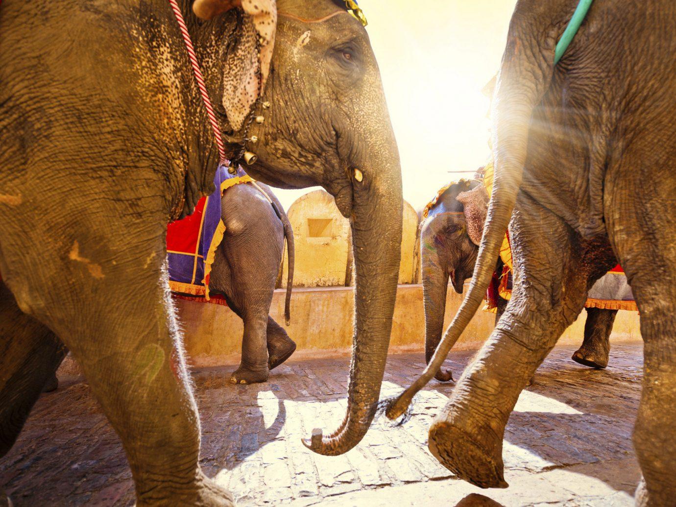 Travel Tips elephant ground outdoor indian elephant elephants and mammoths animal mammal fauna mahout Wildlife zoo trunk