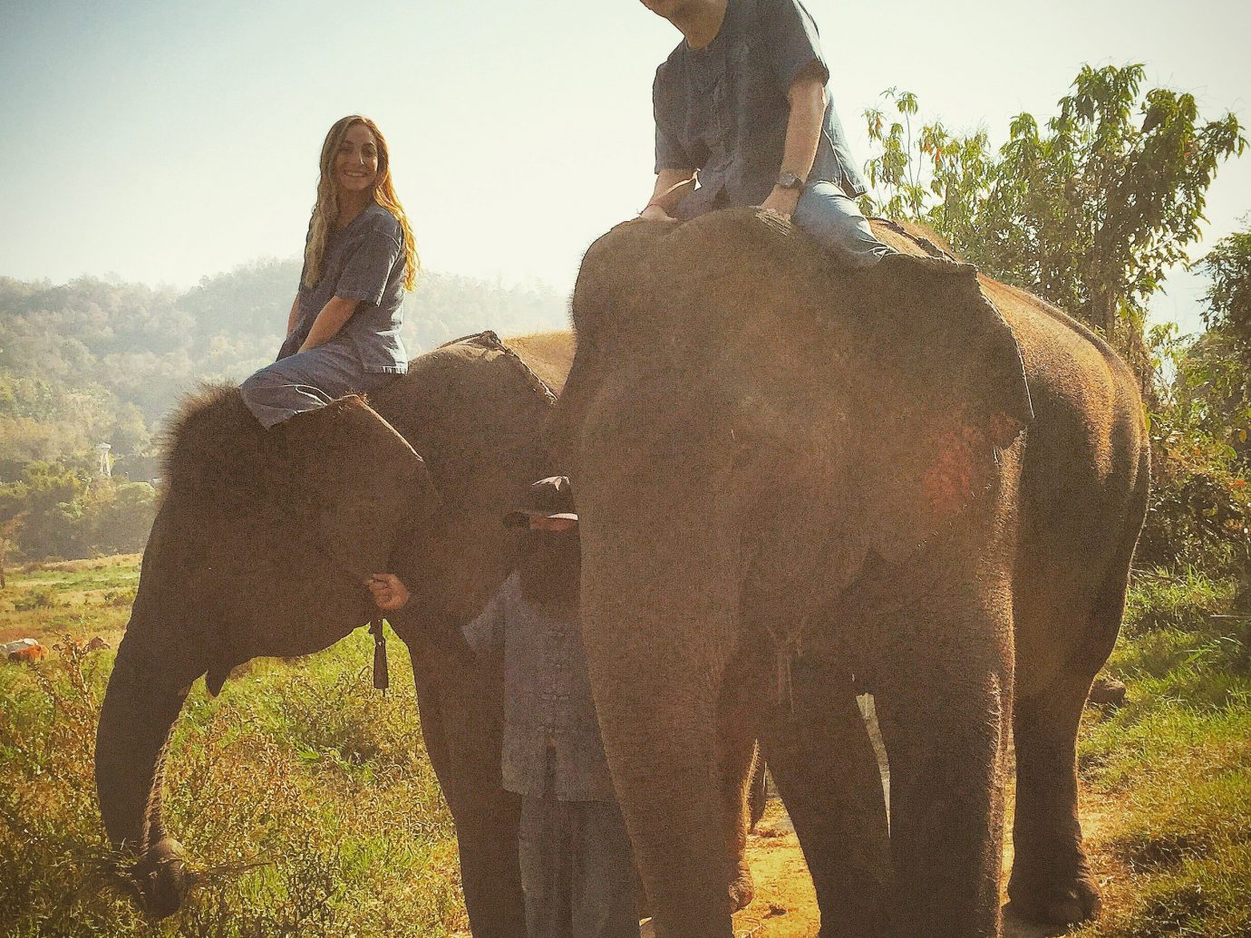 Trip Ideas outdoor elephant sky indian elephant mammal animal elephants and mammoths fauna Wildlife Safari mahout Adventure african elephant Camel