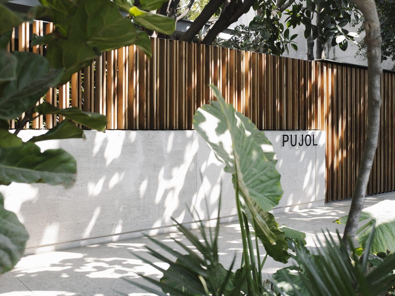Trip Ideas plant green tree botany flower leaf Garden backyard arecales interior design Jungle outdoor structure yard