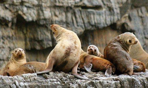 Jetsetter Guides aquatic mammal mammal seal animal seals rock harbor seal vertebrate fauna Wildlife marine mammal prairie dog zoo stone