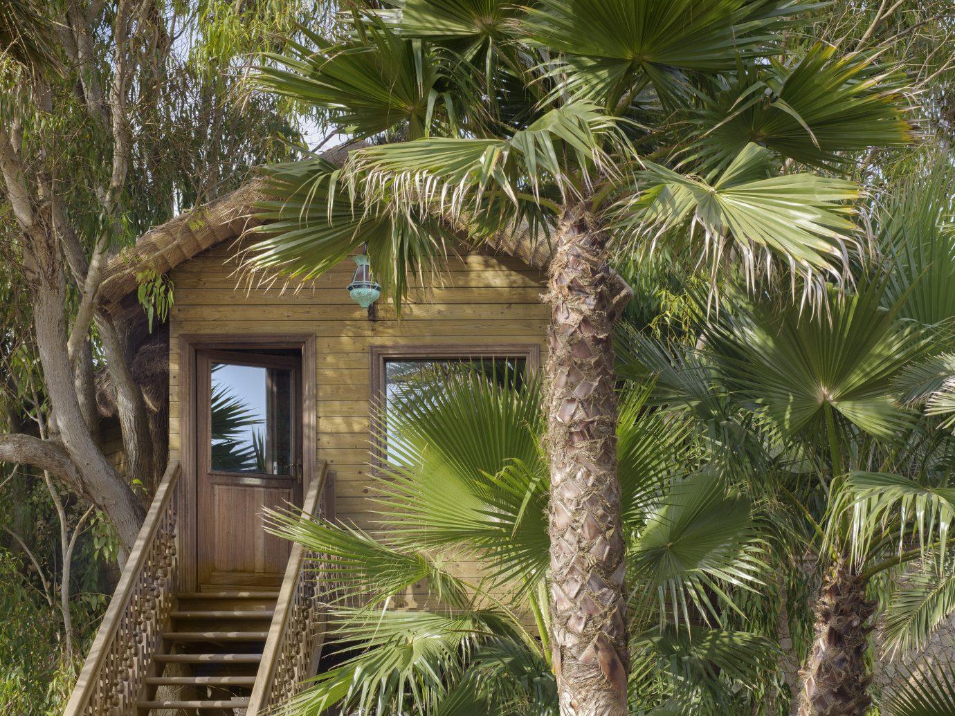 Hotels tree outdoor habitat palm property Resort botany plant Jungle arecales palm family land plant woody plant tropics rainforest home estate shade