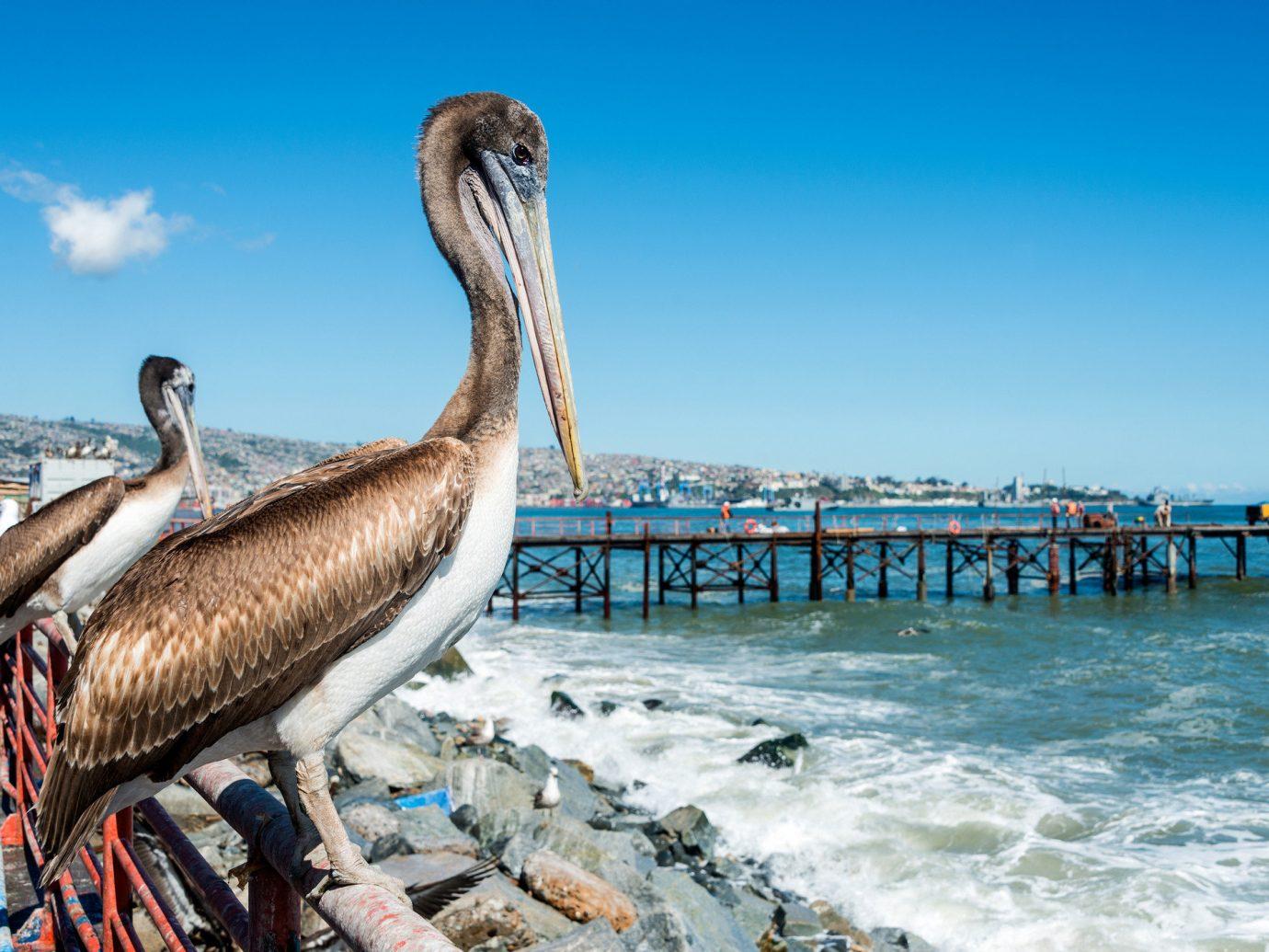 Trip Ideas sky outdoor Bird water pelican pier standing animal fauna vacation aquatic bird Sea seabird railing sandy