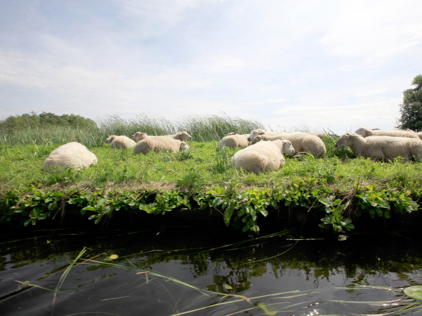 Trip Ideas outdoor sky sheep grass pasture fauna ecosystem herd grazing Wildlife mammal rural area flower hillside