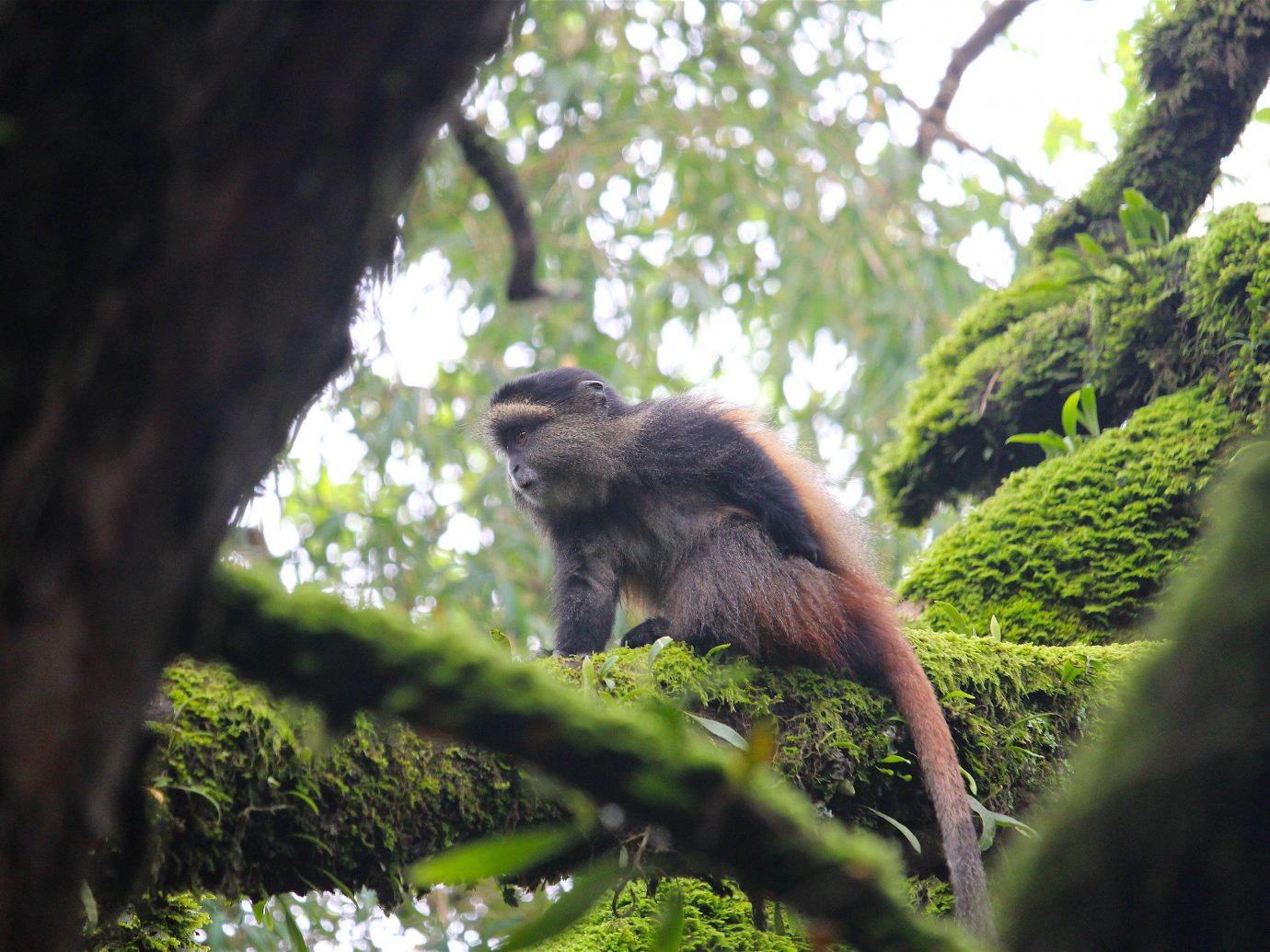 Adventure Off-the-beaten Path Trip Ideas tree outdoor animal bear fauna mammal Wildlife nature reserve leaf Jungle new world monkey Forest primate branch rainforest macaque green organism old world monkey woodland grass old growth forest wood day lush wooded