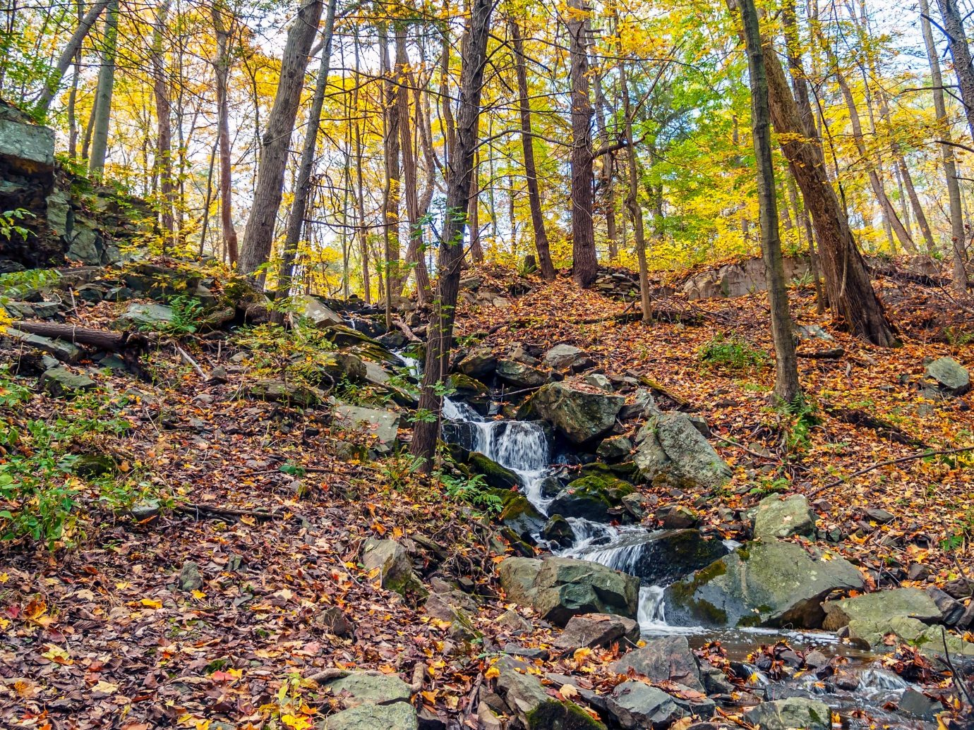 Outdoors + Adventure Road Trips Trip Ideas tree outdoor grass Forest wood Nature leaf wooded vegetation water autumn deciduous woodland plant stream area landscape state park rock old growth forest surrounded lush