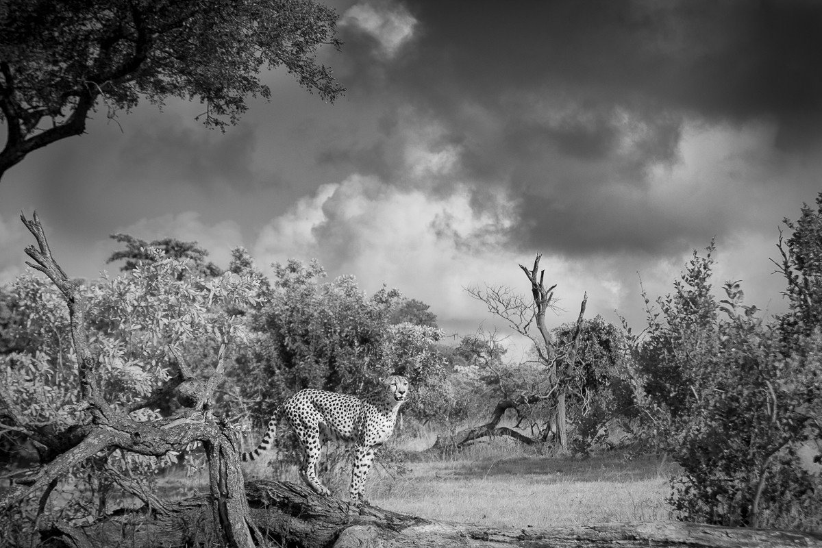 Trip Ideas tree outdoor sky habitat Nature black and white atmospheric phenomenon monochrome photography monochrome photography cloud weather plant field Winter Forest darkness woody plant rural area landscape branch mist pasture surrounded