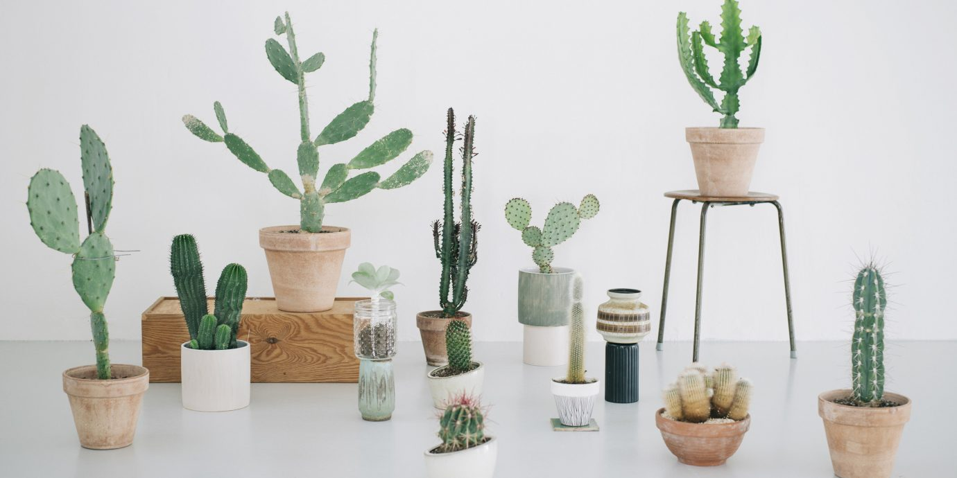 Offbeat Style + Design Travel Trends wall plant cactus flowerpot vase product design flowering plant ceramic houseplant table caryophyllales lamp furniture several