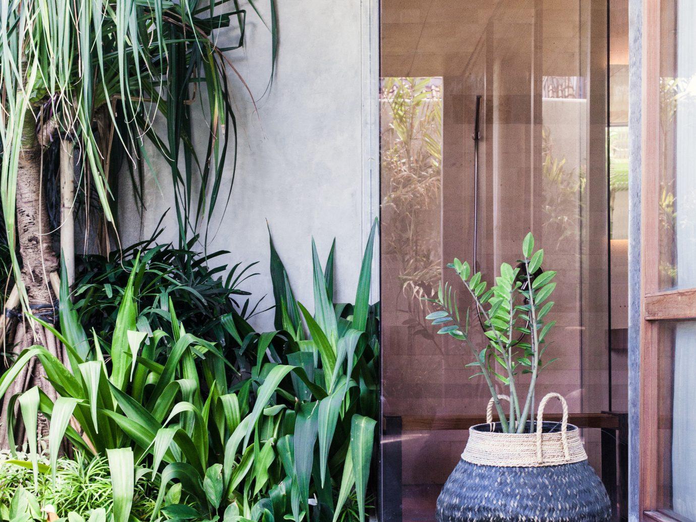 Jetsetter Guides plant property floor interior design backyard Courtyard estate Resort