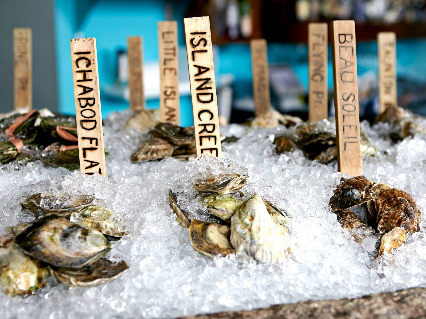 Beach Trip Ideas food indoor Seafood biology invertebrate oyster clams oysters mussels and scallops several