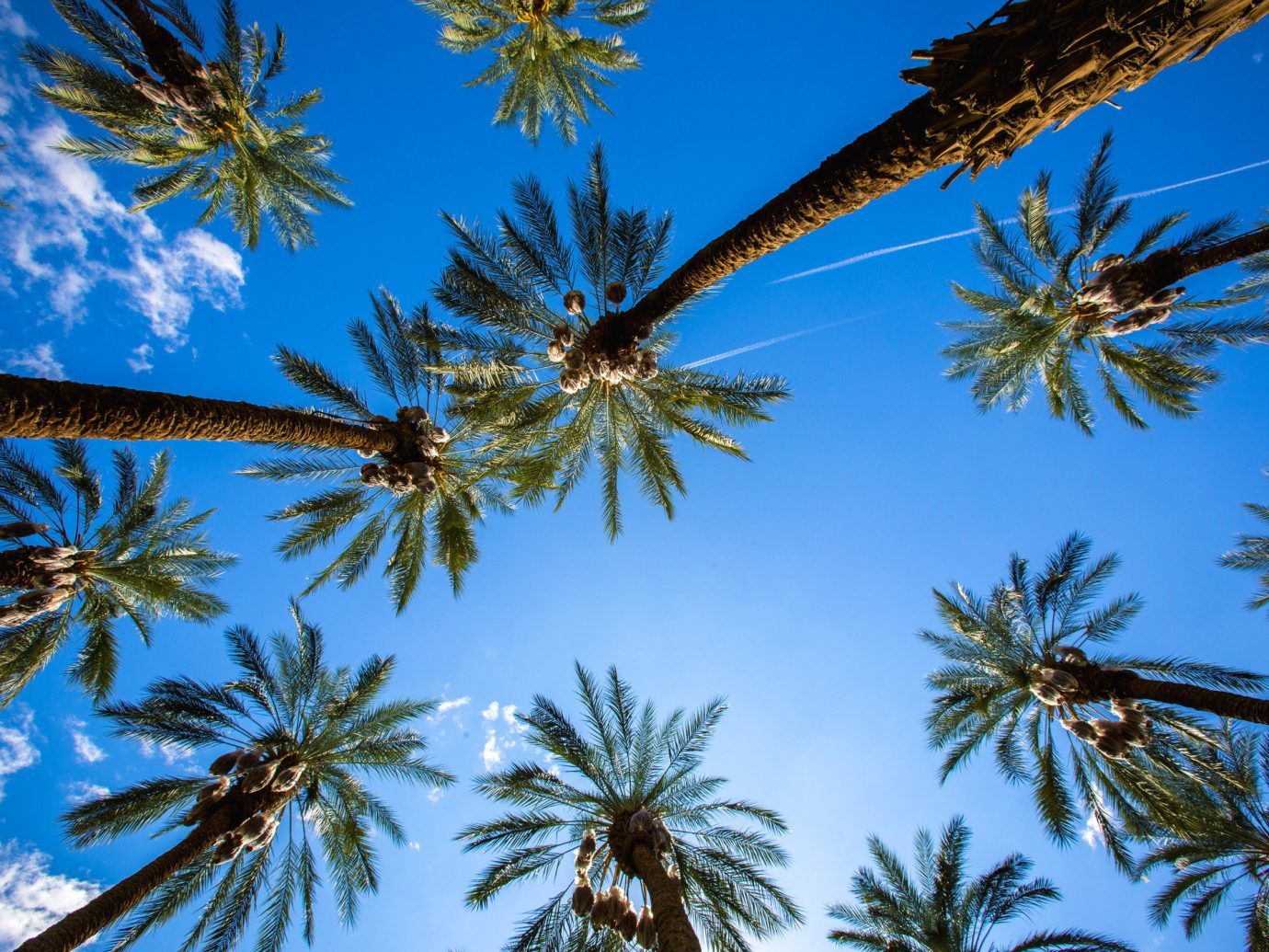 Offbeat tree palm sky plant outdoor palm family flora botany borassus flabellifer land plant woody plant arecales branch leaf flower tropics flowering plant conifer lined Christmas surrounded