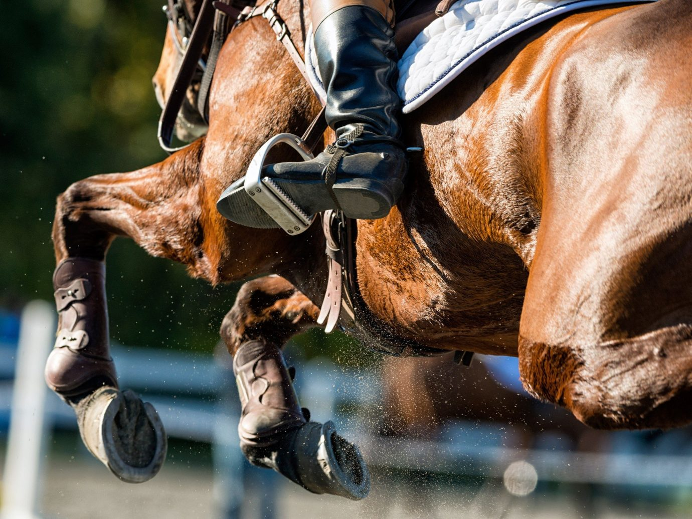 Offbeat horse outdoor english riding equestrianism eventing sports jockey equestrian sport stallion outdoor recreation horse like mammal animal sports extreme sport jumping riding