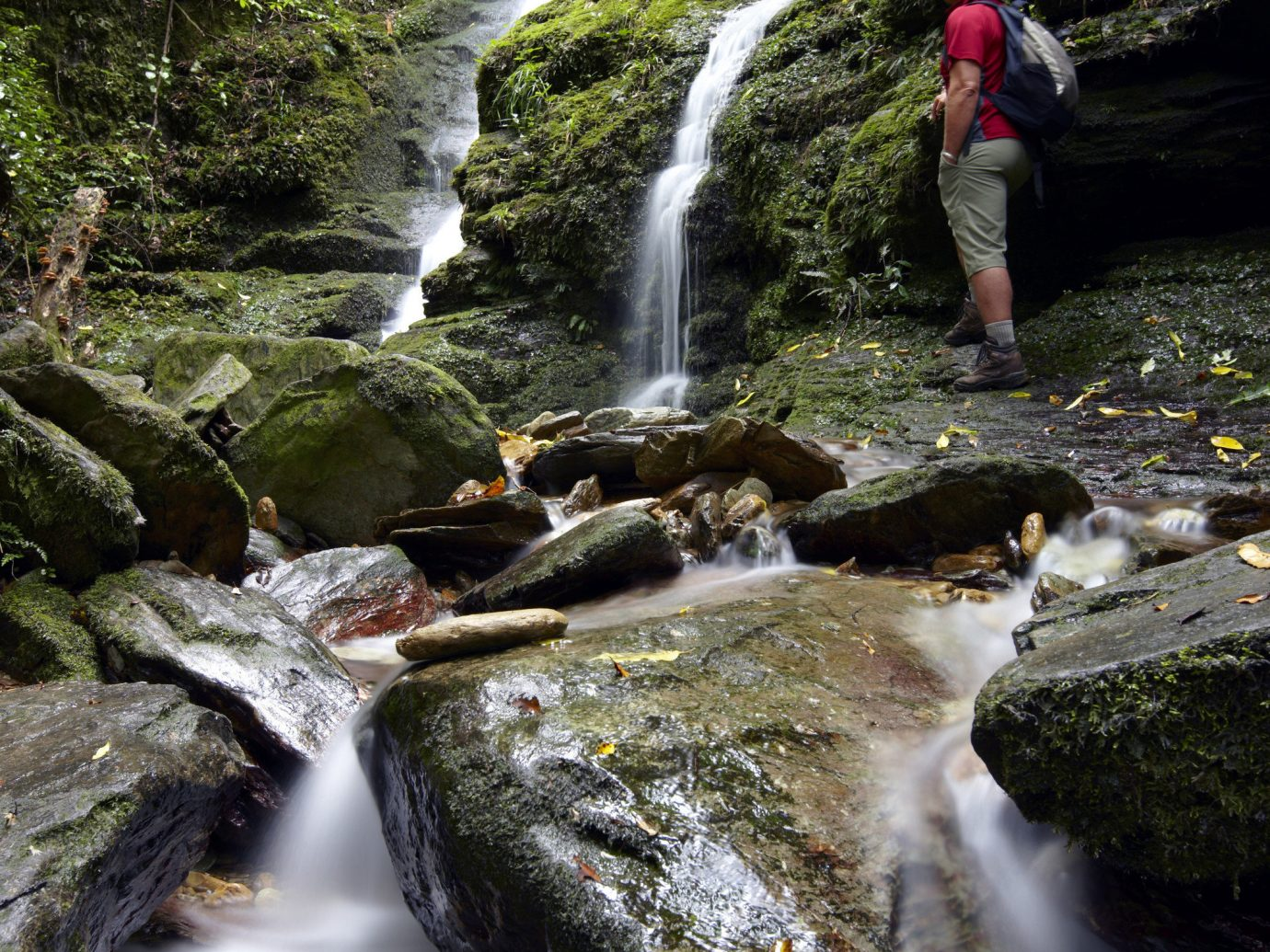 Trip Ideas tree Nature outdoor water Waterfall stream body of water rock creek watercourse wilderness nature reserve water feature plant water resources River leaf rainforest Forest landscape arroyo ravine state park rapid woodland Jungle tributary old growth forest Adventure