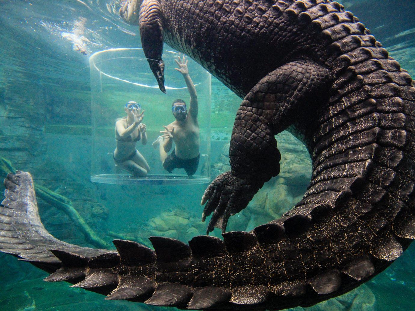 Trip Ideas water reptile animal marine biology fauna organism underwater swimming Wildlife marine mammal