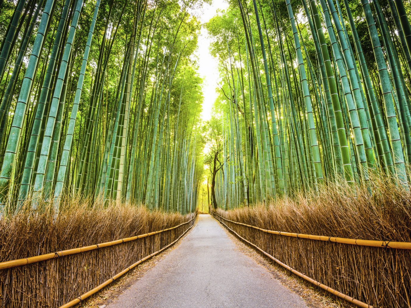 Offbeat Trip Ideas Fence habitat outdoor Nature bamboo plant tree green natural environment Forest sunlight leaf grass woodland woody plant field branch grass family autumn Jungle