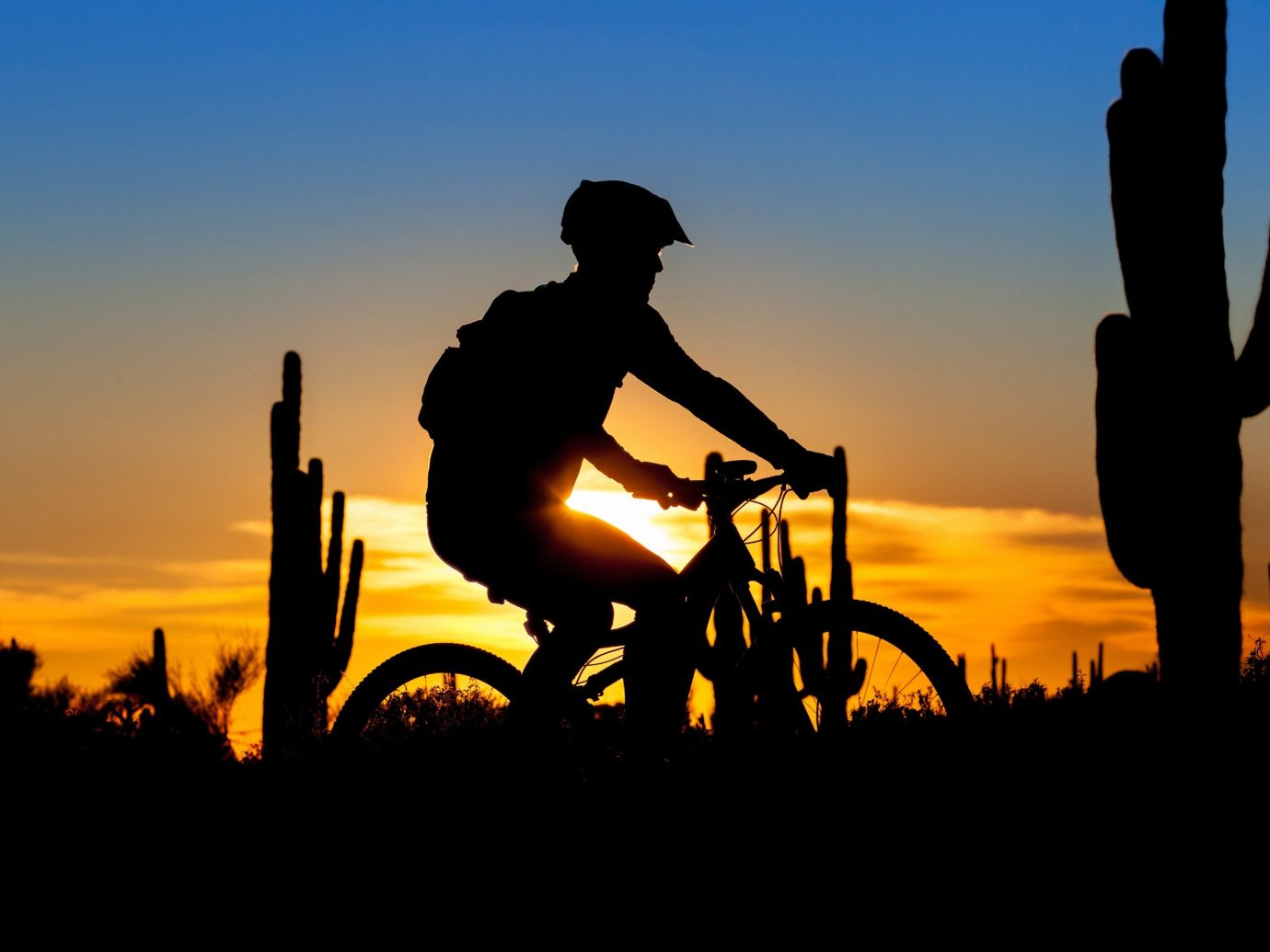 Trip Ideas sky outdoor plant cactus Sunset silhouette Sun morning evening sunrise dusk setting dawn dark clouds day