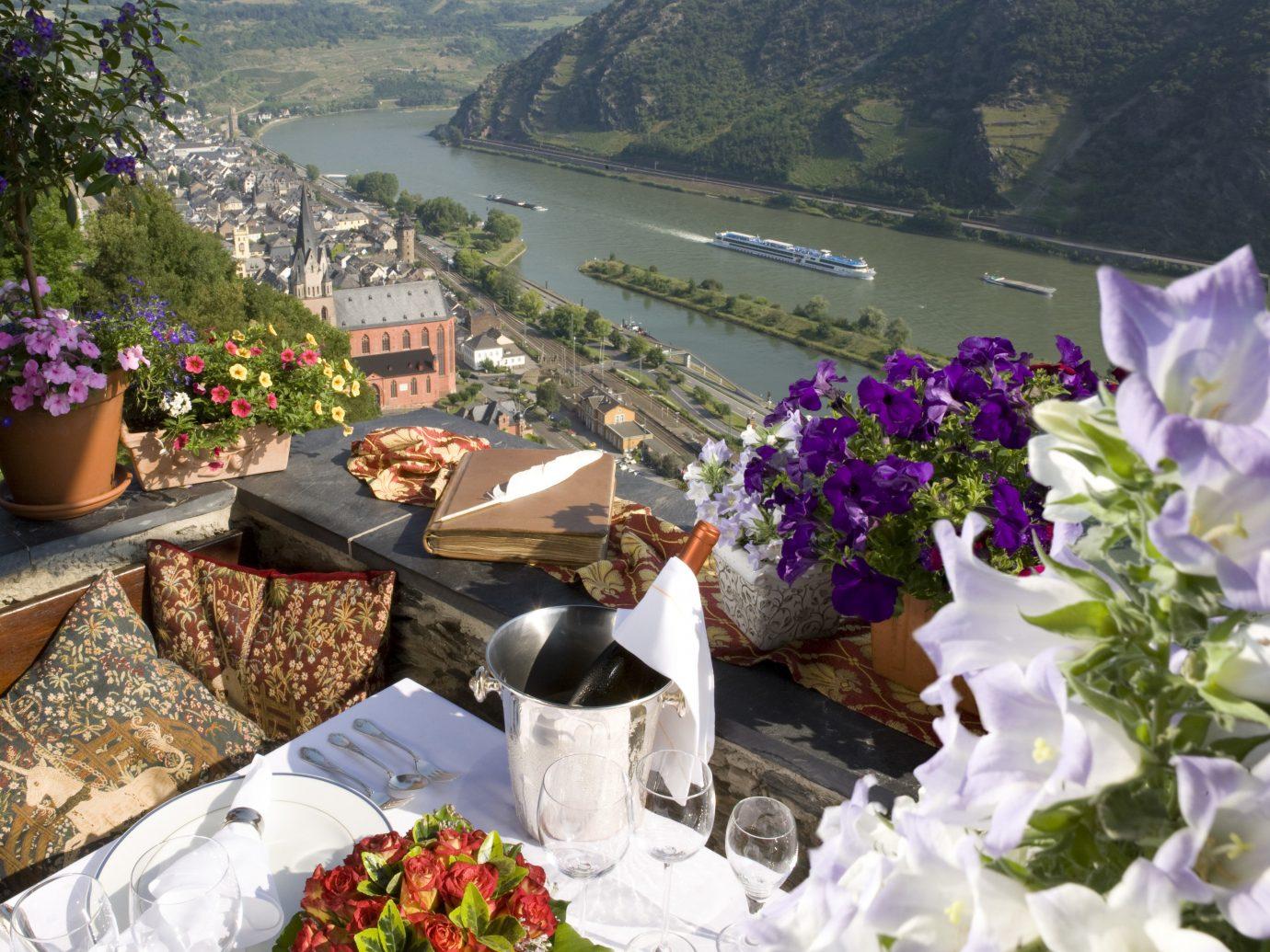 Hotels flower outdoor flora floristry plant