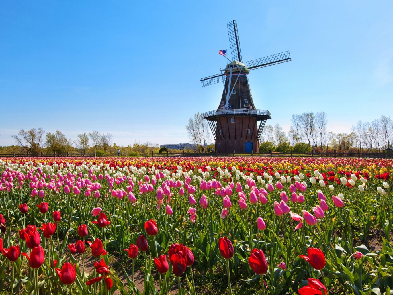 Trip Ideas sky tree outdoor flower plant field red land plant windmill flowering plant rural area meadow prairie colored crowd