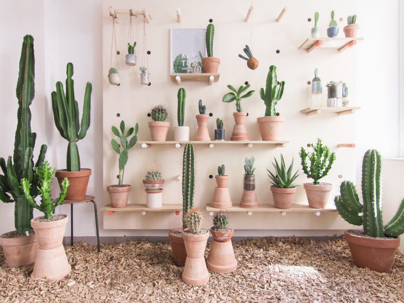 Offbeat Style + Design Travel Trends plant wall cactus flowerpot flowering plant flower furniture product design caryophyllales houseplant