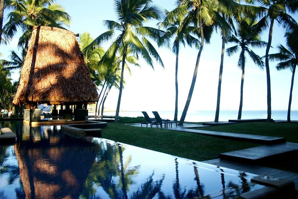 tree palm plant Resort arecales swimming pool lined