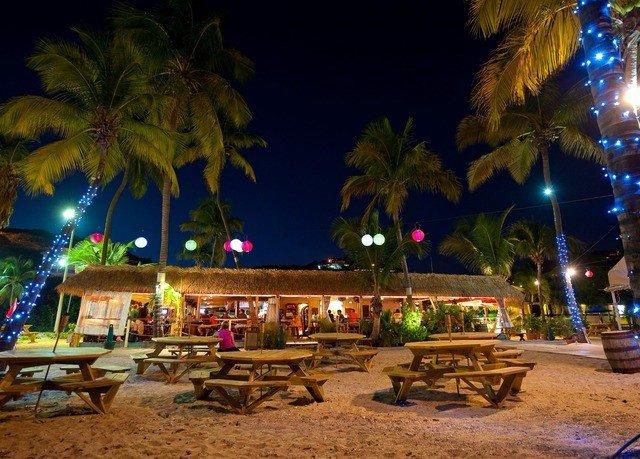 tree night Resort christmas decoration palm lighting evening plant lined empty shade