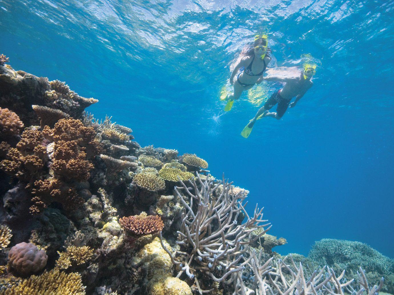 Trip Ideas coral reef reef marine biology underwater Ocean Sea rock biology Nature diving coral reef fish sports coral