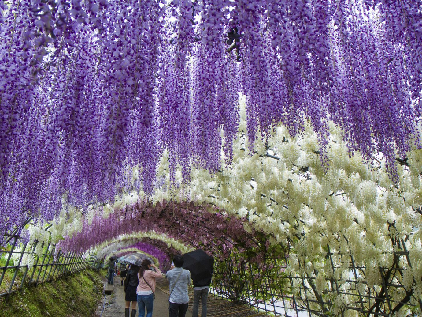 Arts + Culture Festivals + Events Travel Tips tree flower lavender plant flora english lavender botany land plant blossom flowering plant shrub