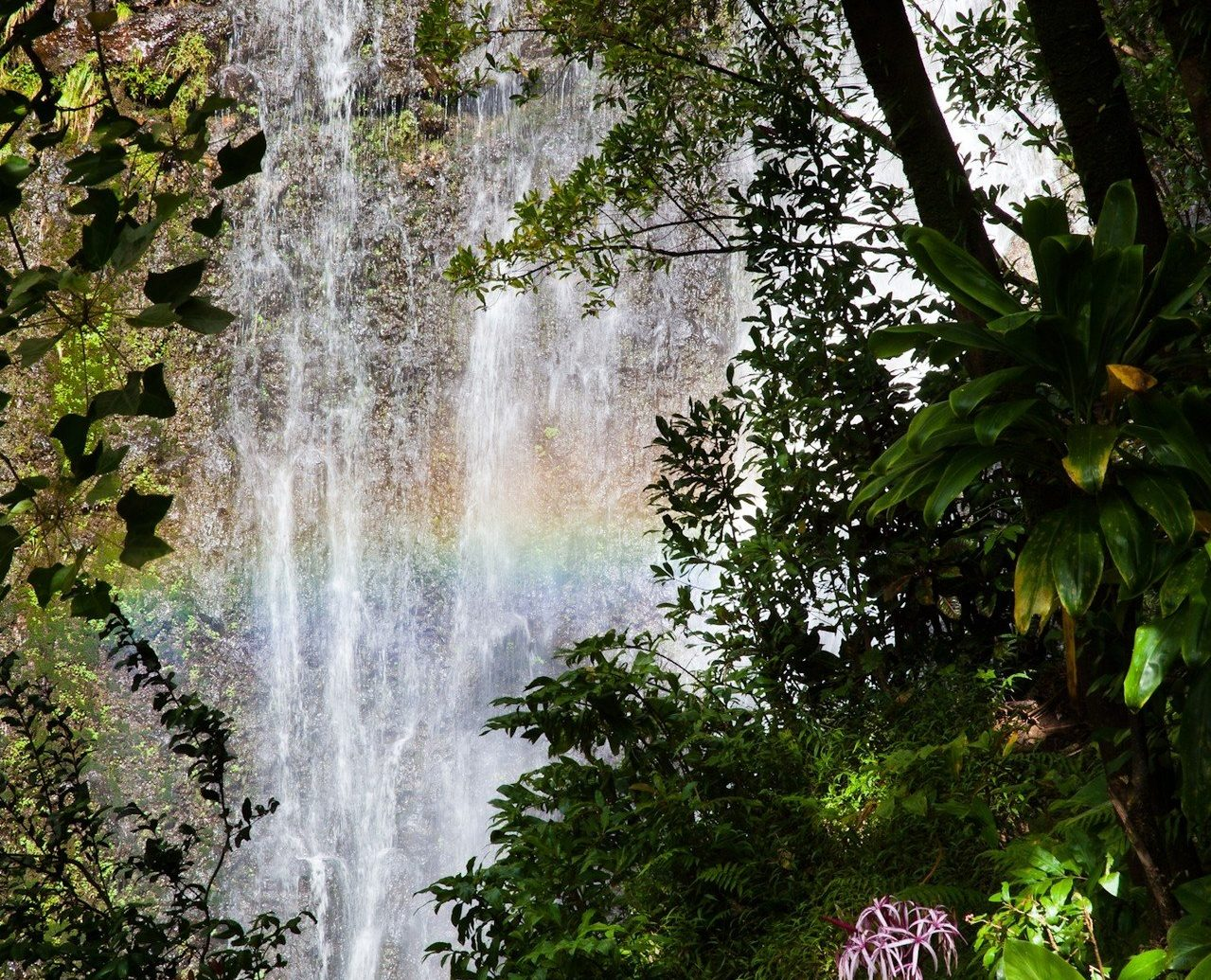 plants rainbow Romance Trip Ideas water Waterfall tree outdoor Nature habitat vegetation body of water natural environment rainforest water feature Forest botany leaf Jungle woodland sunlight flower surrounded