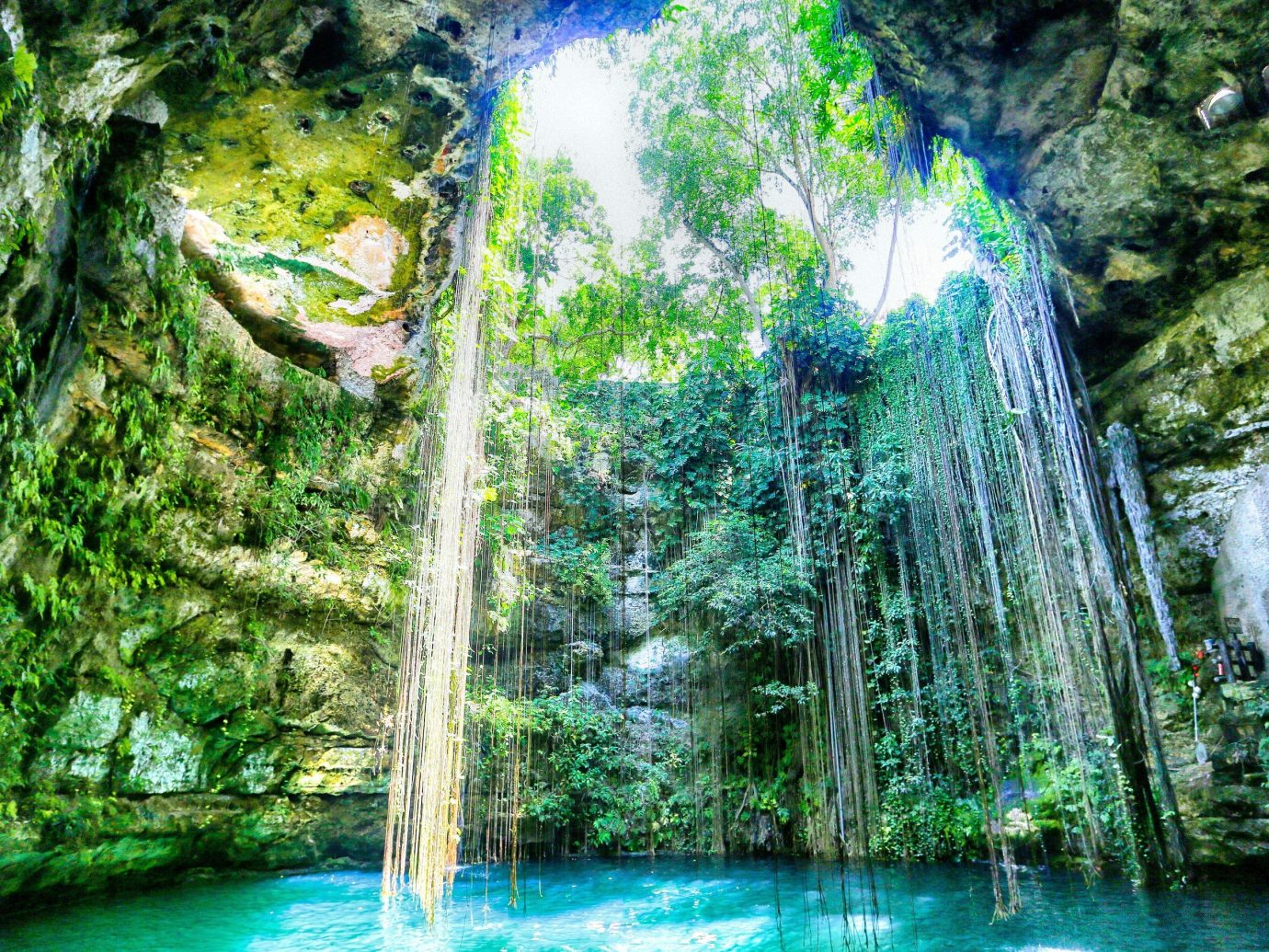 Outdoors + Adventure tree water habitat outdoor Waterfall Nature green body of water natural environment River Forest rainforest botany water feature Jungle reflection woodland sunlight tropics surrounded