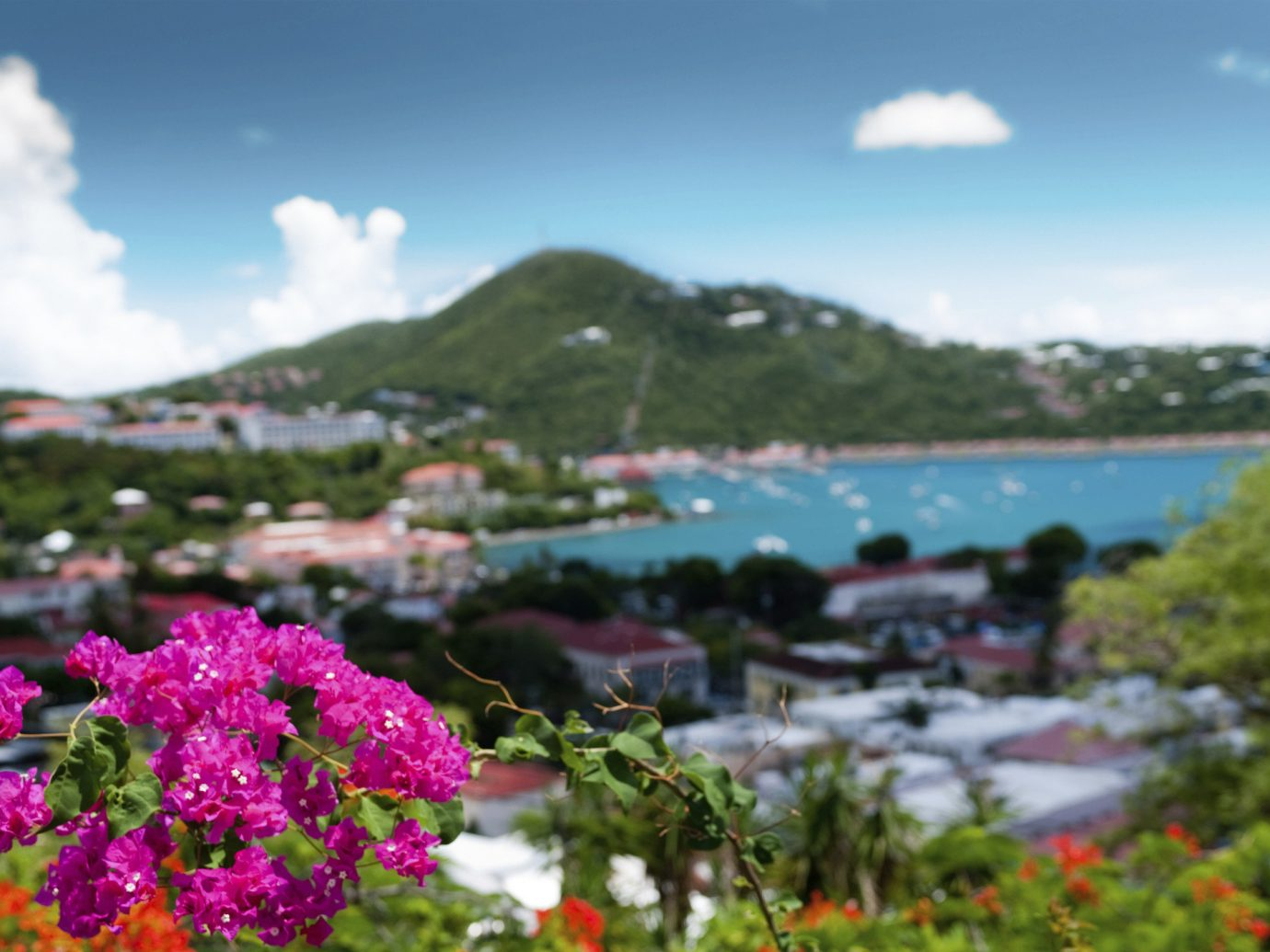 Trip Ideas sky flower outdoor Nature flora plant vacation Sea Coast colorful surrounded