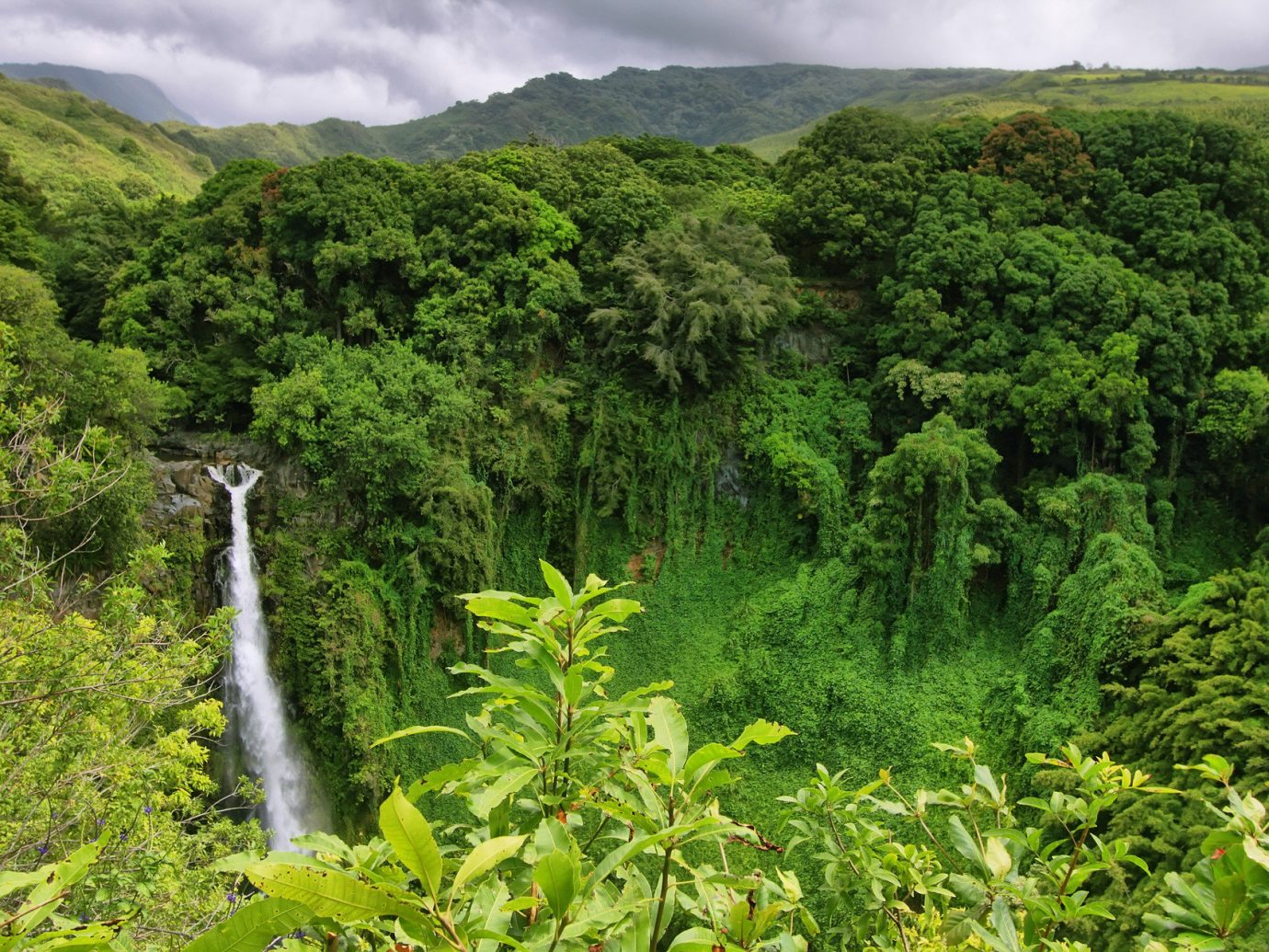 Jetsetter Guides tree outdoor vegetation habitat green rainforest natural environment Forest ecosystem flora Nature botany old growth forest plant Jungle hill mountain flower plantation Waterfall biome water feature tropics shrub surrounded lush wooded