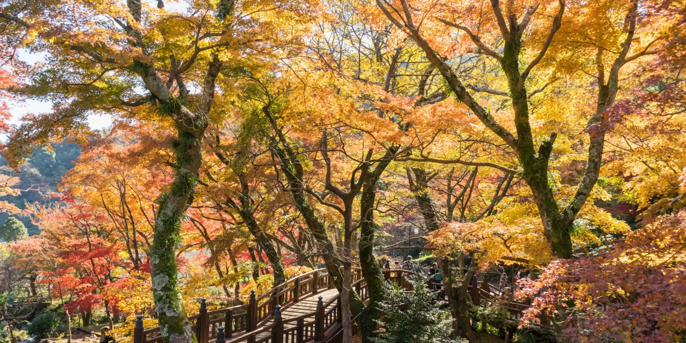 Day Trips tree outdoor Nature autumn leaf woody plant plant deciduous maple tree spring woodland branch temperate broadleaf and mixed forest maidenhair tree landscape state park wooded