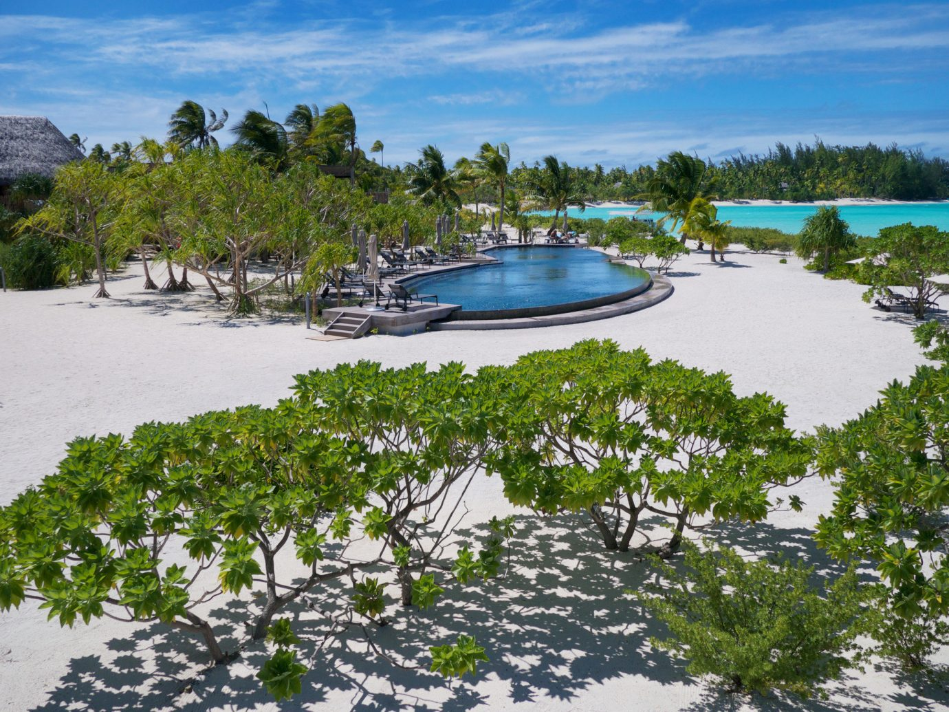 Beach calm Greenery Hotels isolation Luxury Ocean palm trees Pool private remote serene trees Tropical turquoise white sands tree outdoor sky water shore ecosystem Nature Resort vacation Sea bay Coast Lagoon cove Lake Island marina archipelago lined