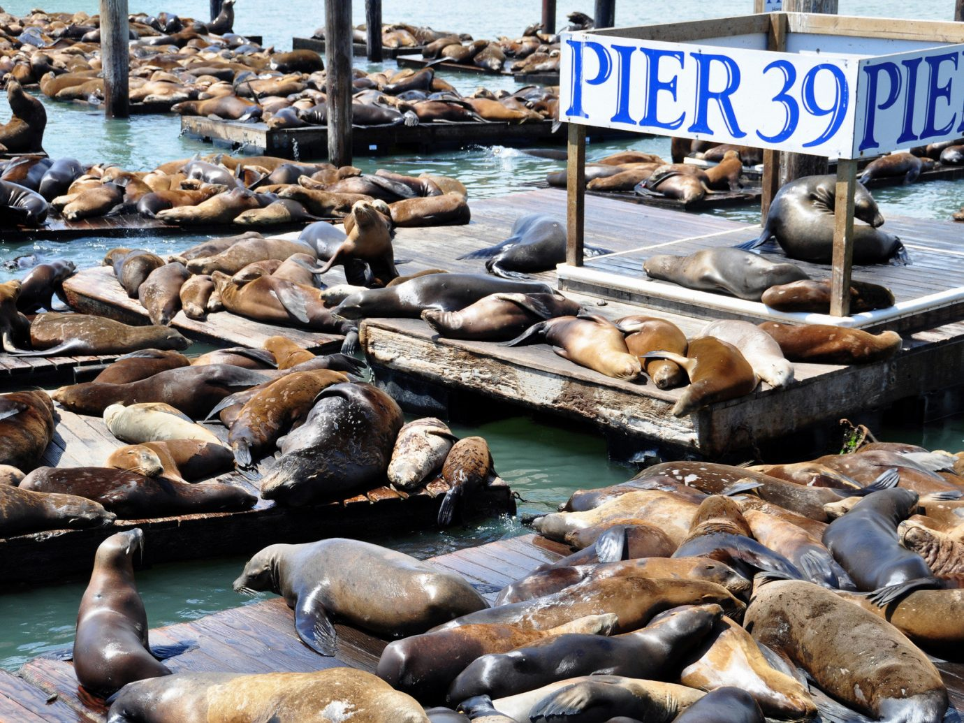 Trip Ideas aquatic mammal mammal seal animal outdoor rock seals marine mammal Sea wood surrounded