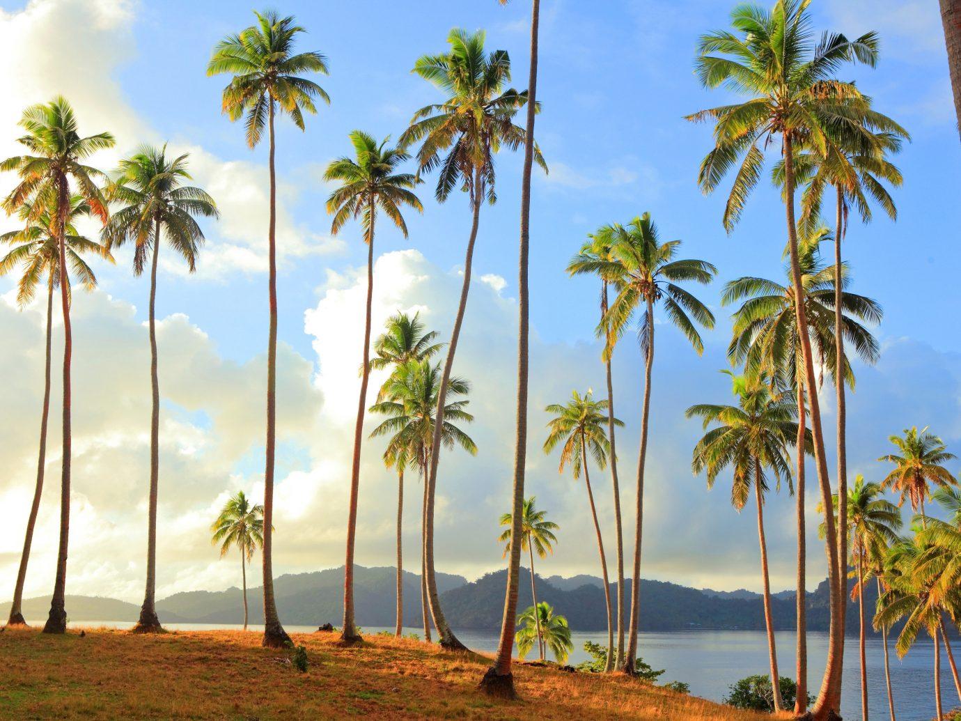 Islands Trip Ideas palm sky tree outdoor Beach water palm family vegetation plant tropics Ocean caribbean botany arecales land plant woody plant vacation Coast lined borassus flabellifer Sea flowering plant Jungle Island savanna sandy shade