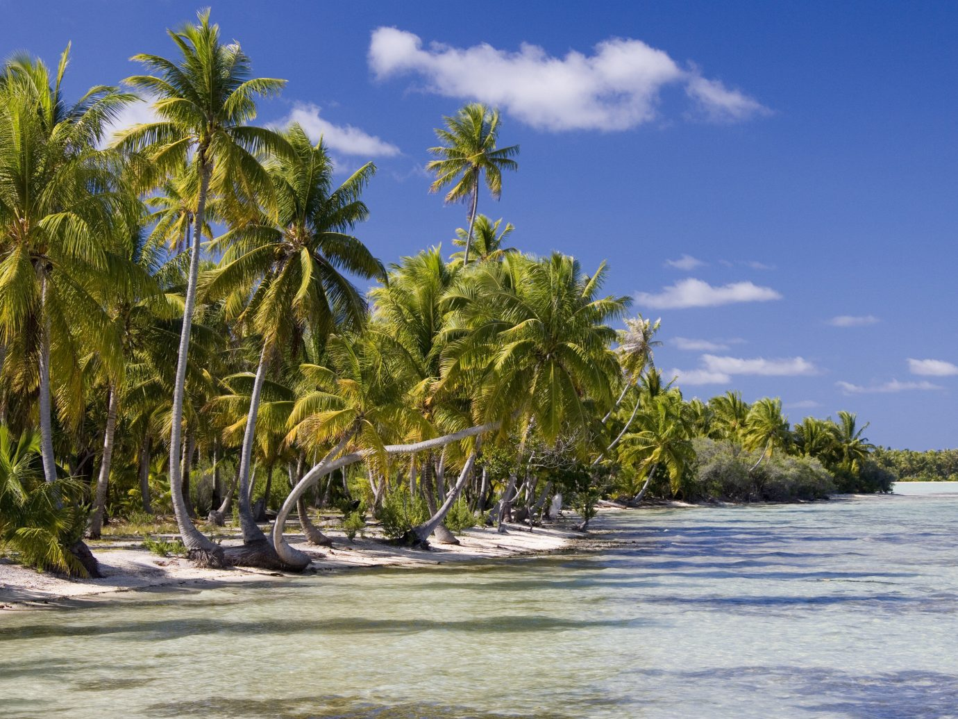 Islands Trip Ideas tree outdoor sky geographical feature shore landform body of water Beach plant Sea Coast River arecales tropics vacation Ocean bay caribbean Island Nature Lagoon vehicle palm family palm sandy