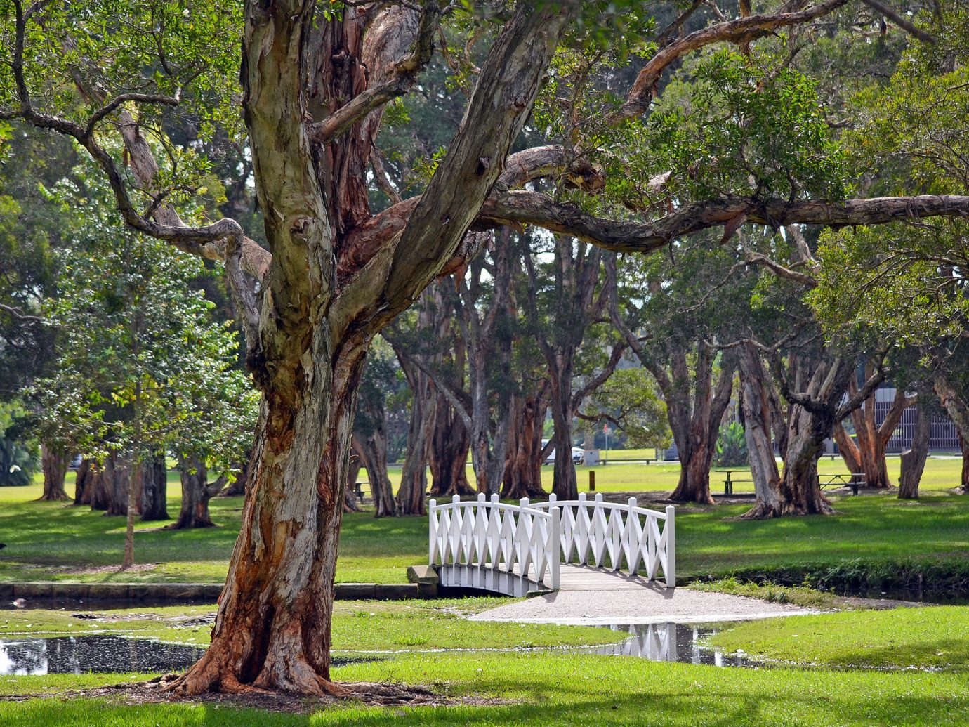 City Outdoors + Adventure Sydney grass tree outdoor park Nature plant woody plant grove field lawn leaf flora branch Garden landscape spring plantation outdoor structure estate shrub grassy landscaping woodland bayou lush