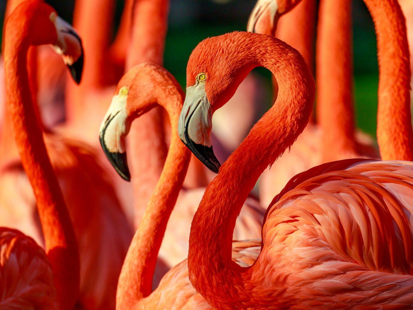 Trip Ideas flamingo aquatic bird Bird red beak vertebrate animal water bird close up
