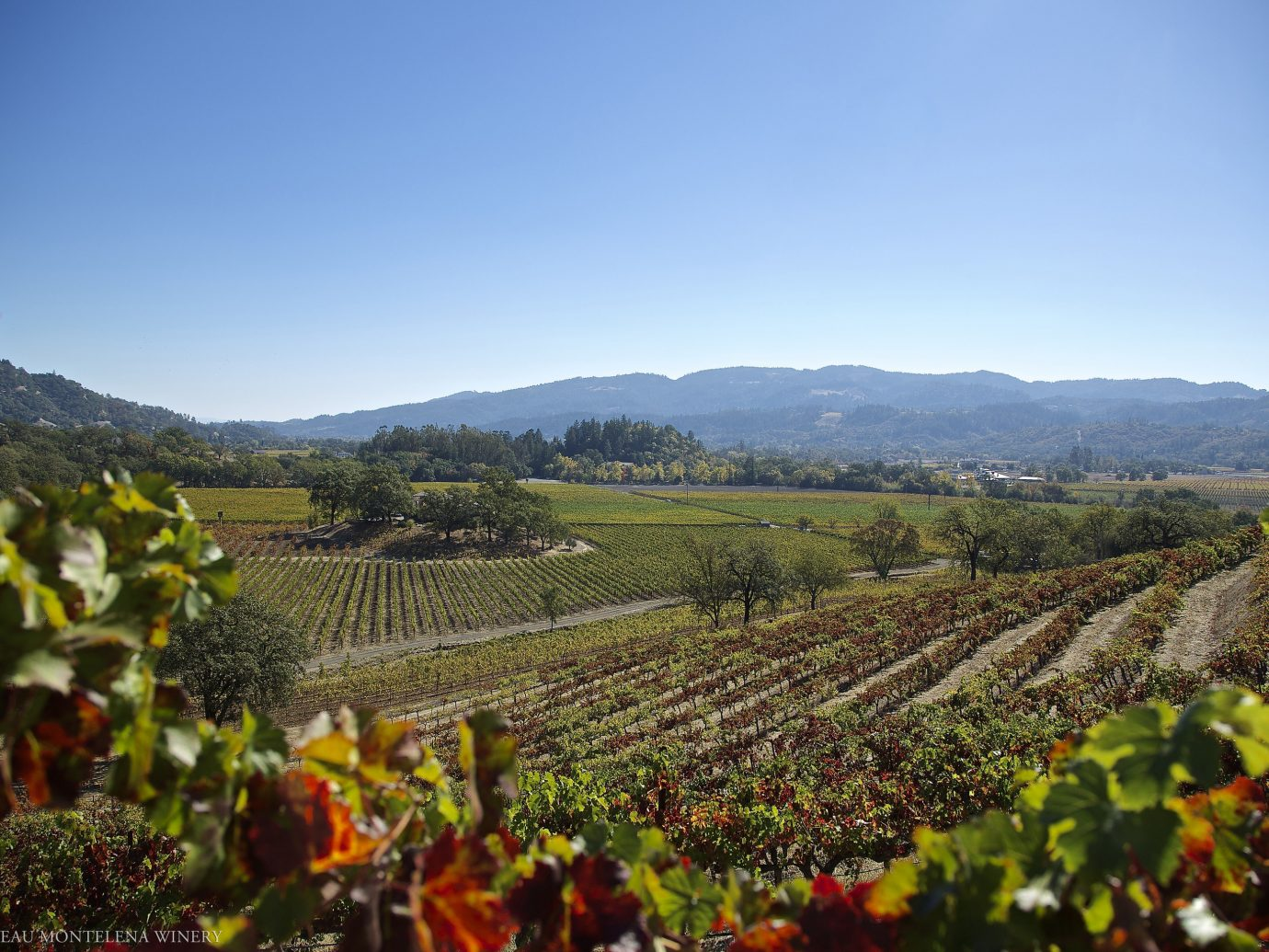 Food + Drink sky outdoor grass agriculture mountain Vineyard flower field hill rural area Nature valley plantation autumn