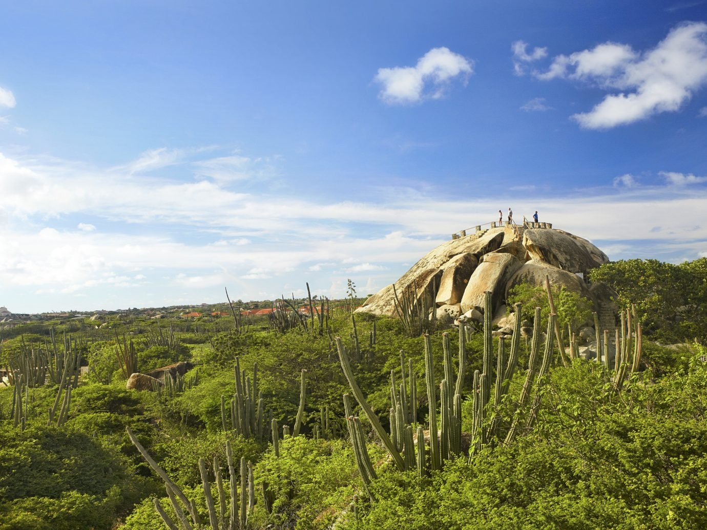 Trip Ideas sky outdoor grass tree Nature field wilderness plant natural environment ecosystem hill vacation savanna mountain arecales rural area landscape pasture green Jungle national park lush day hillside