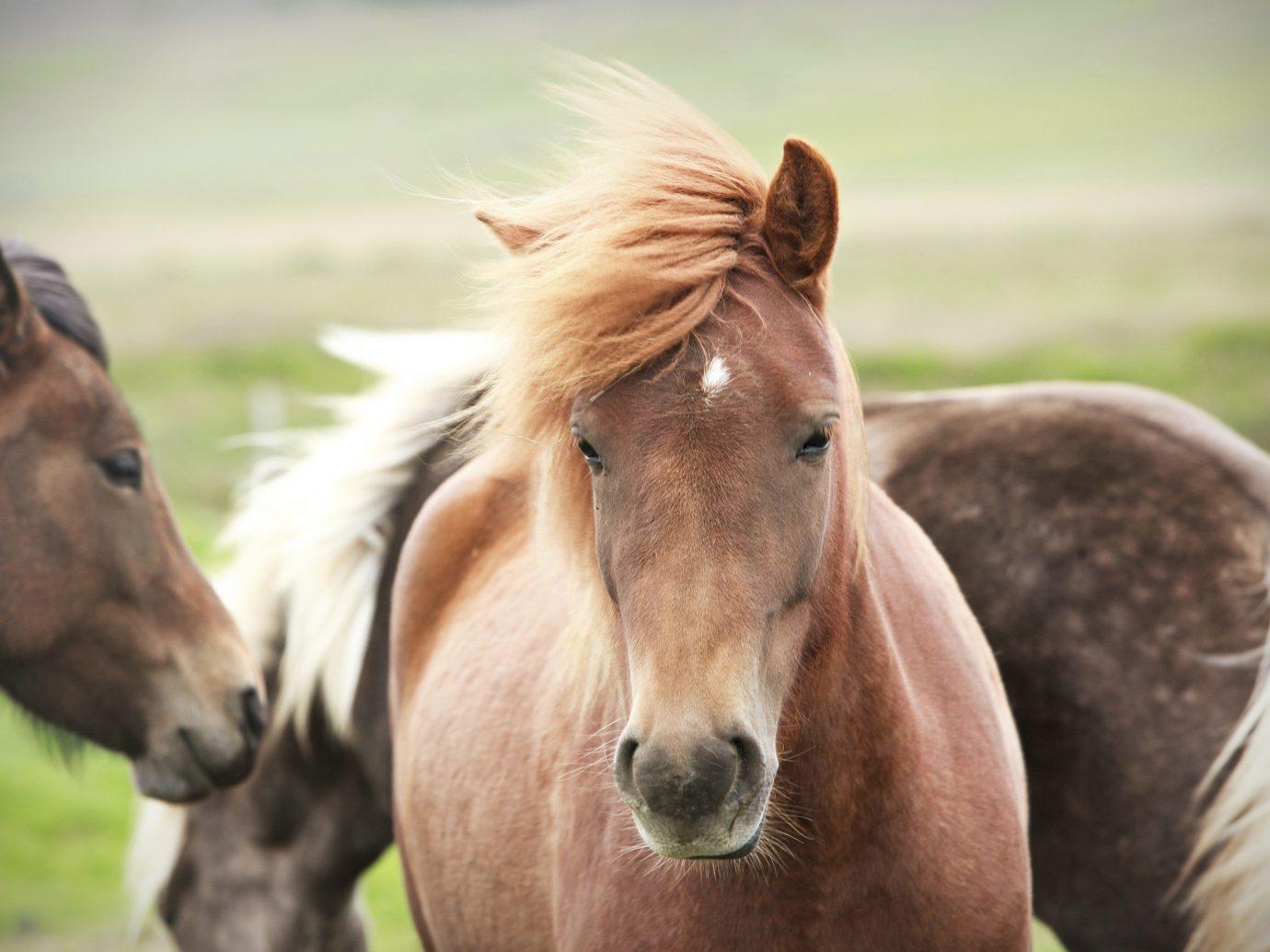 Trip Ideas grass horse outdoor animal mammal field vertebrate mare mane fauna pasture mustang horse horse like mammal stallion standing foal colt grassy close