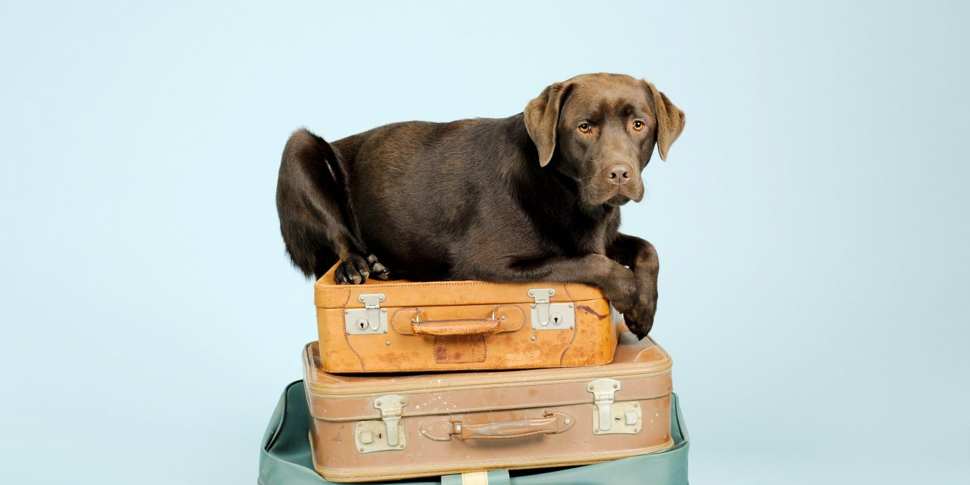 News Offbeat Dog dog like mammal dog breed snout puppy leash product box dog bed seat sofa