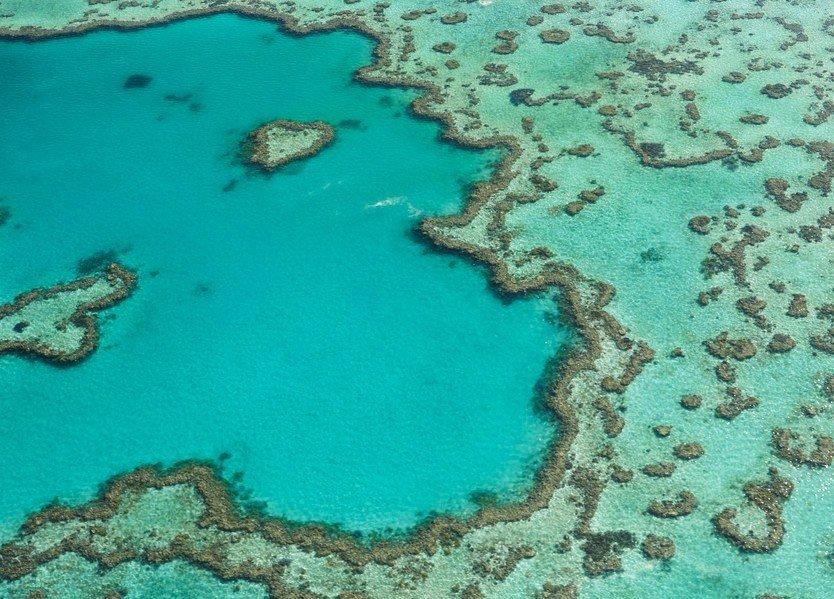 Trip Ideas cake habitat reef landform marine biology coral reef natural environment coral biology Sea old Lagoon surrounded