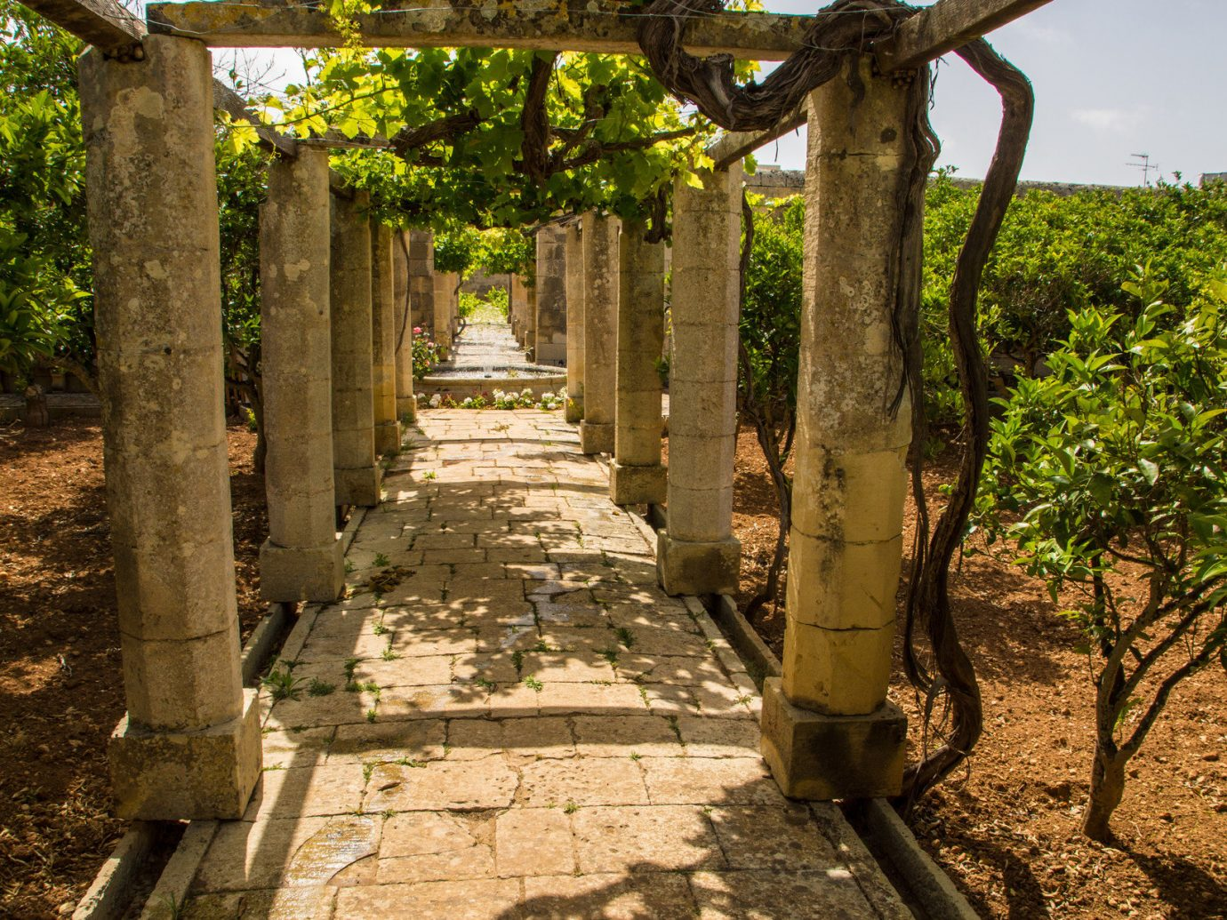 column columns Trip Ideas tree outdoor ground Ruins plant ancient history rural area Garden temple shrine flower wooded