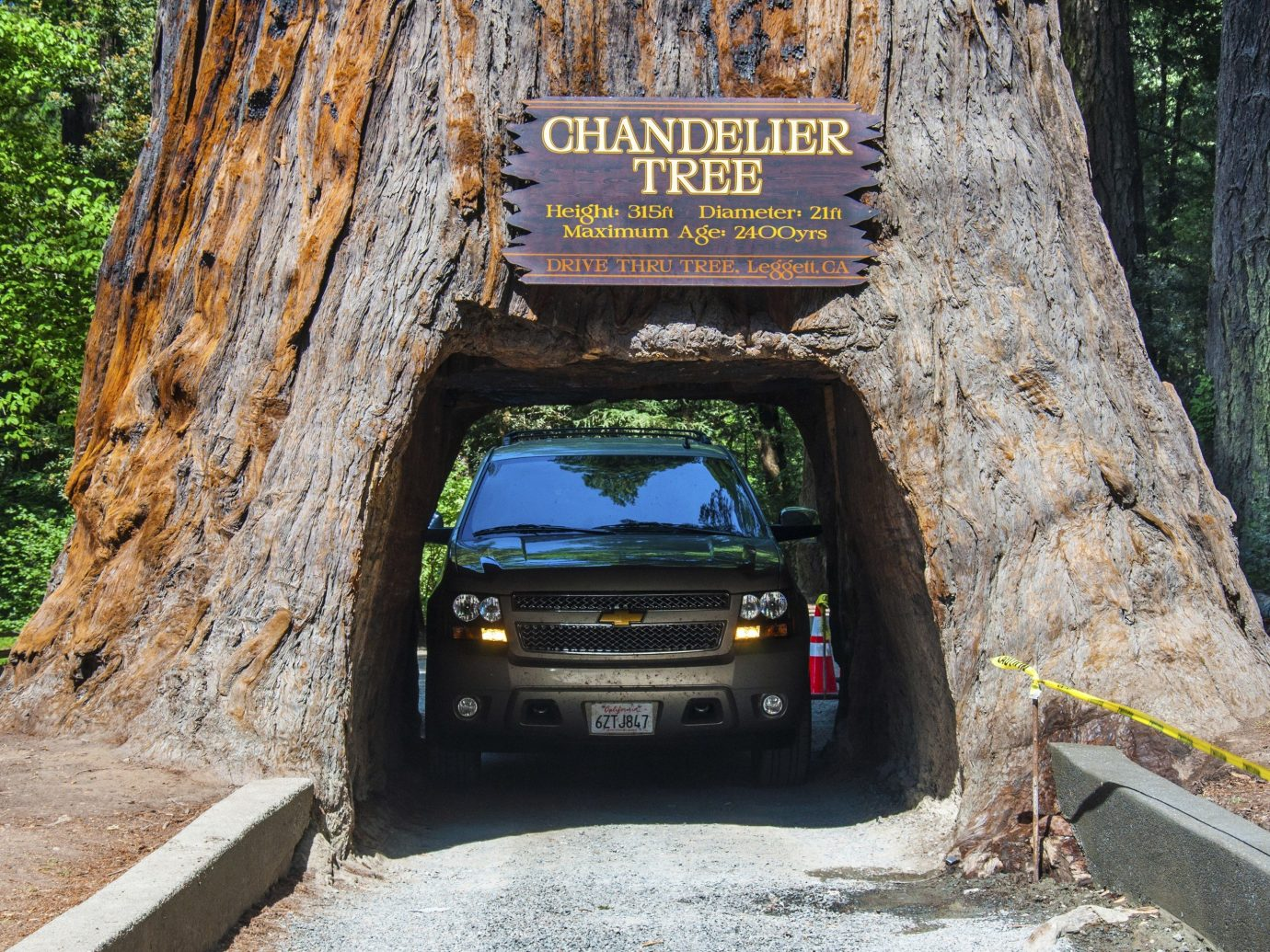 Offbeat tree outdoor road car off roading trail sign plant infrastructure way vehicle road trip trunk