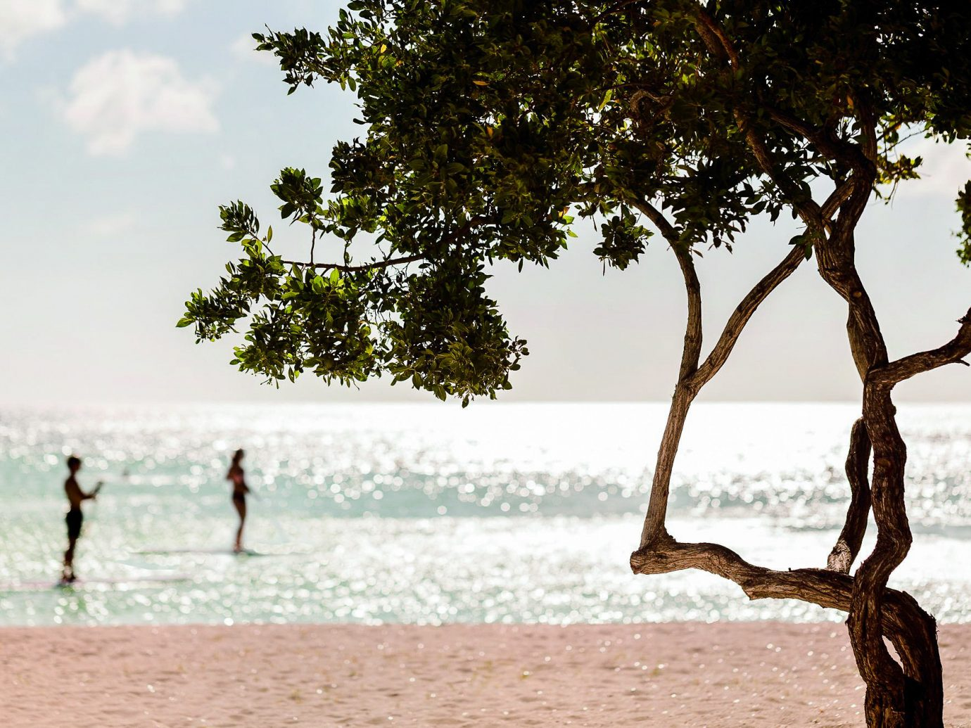 Hotels Romance outdoor tree sky water Beach vacation plant morning leisure summer recreation shore fun tourism sand Sea sandy day